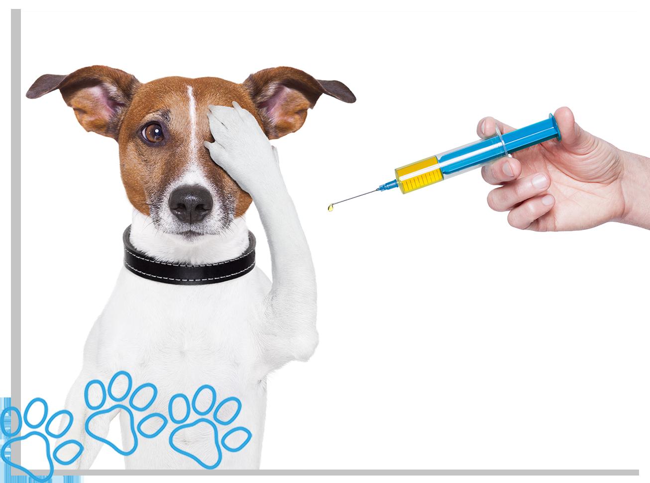 servicos-vaccination